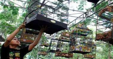 Lomba Seni Burung Derkuku Jadi Agenda Wisata Tahunan