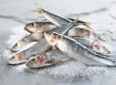 Waduh, Ternyata Ikan Laut Rentan Mengandung Bakteri E Coli