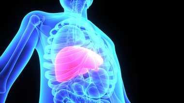 EKSKLUSIF: Wow, Ternyata Ada Lebih dari 500 Fungsi Hati untuk Tubuh