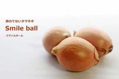 Perusahaan Jepang Produksi Bawang Bebas Air Mata