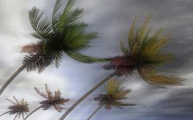 BMKG Ingatkan Masyarakat Bali Waspadai Angin Kencang