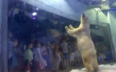 "Minta Dibebaskan, Mal di Tiongkok Tetap ""Siksa"" Beruang Kutub"