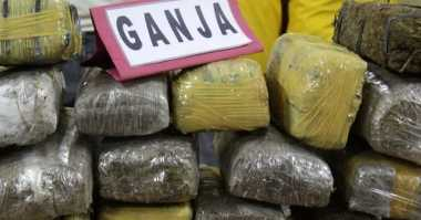 Tangkap Bandar, Polisi Amankan 65 Kg Ganja