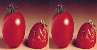 TOP FOOD 1: Punya Tomat Hampir Busuk? Ini Trik Mengolahnya