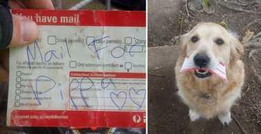 Surat Istimewa Pak Pos untuk Anjing Pippa
