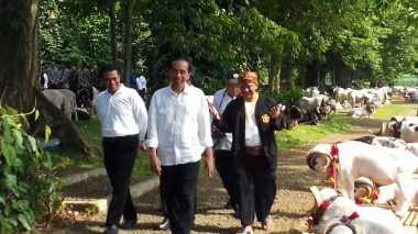 Minder Harga Dombanya Murah, Jokowi Batal Ikut Kontes