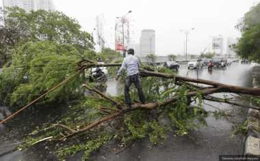 Hujan Deras Disertai Angin Kencang Tumbangkan Pohon Besar