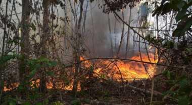 FOKUS: Sumatera Dikepung Asap, Salah Siapa?