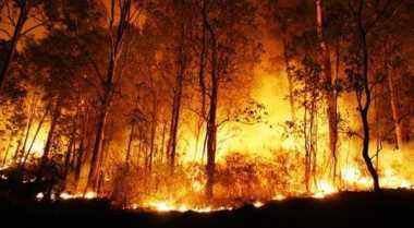 Prajurit TNI Turun Tangan Hadapi Kebakaran Hutan di Riau