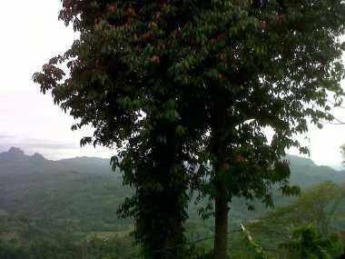 Tiga Daerah di Bengkulu Mulai Diselimuti Kabut Asap