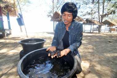 Kisah Sang Penyelamat Penyu di Tanah Minang