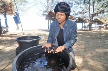 Impian Horiyos, Sang Penyelamat Penyu di Tanah Minang