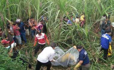 Polisi Ringkus Pembunuh Pemandu Lagu di Ladang Tebu