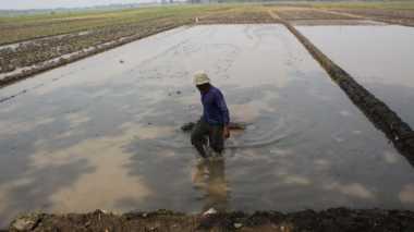 HARI TANI NASIONAL: Nasib Petani, dari Sulitnya Air hingga Langkanya Pupuk