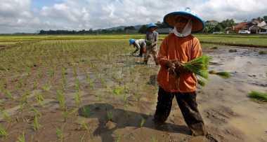 HARI TANI NASIONAL: Jumlah Petani dan Lahan Kian Menyusut