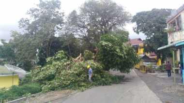 Hujan Deras Sebabkan Pohon Tumbang, Satu Balita Tewas