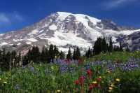 Pemandangan di Pegunungan Rainier Bak Lukisan