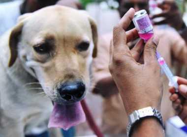 Pentingnya Vaksinasi Hewan Peliharaan dalam Pencegahan Rabies