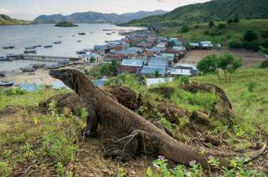 Kemenpar Bangga Raja Ampat, Alor & Komodo Terbaik Wisata Selam di Dunia