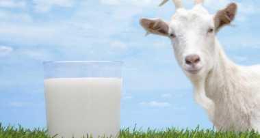 7 Manfaat Minum Susu Kambing untuk Kesehatan