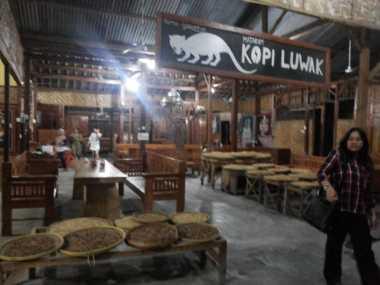 TOP FOOD 5: Kopi Luwak di Yogyakarta, Nikmatnya Hingga Tetesan Terakhir