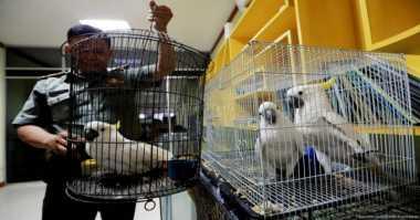 Jual Satwa Dilindungi via Medsos, Karman Ditangkap
