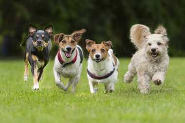 Hal yang Harus Dilakukan Bila Digigit Anjing