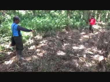 Pohon Jati Milik Negara Dibabat Pencuri di Pati