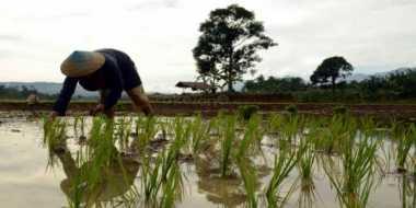 Tingkatkan Produktivitas Petani, Perindo OKU Timur Gagas Program Khusus