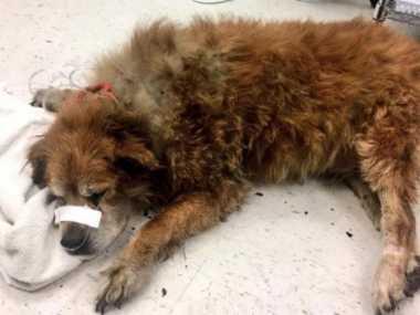 Anjing Heroik Ini Selamatkan Majikannya dari Kebakaran