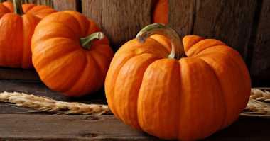 Duh, Niat Pamer Kepala Gadis Ini Malah Tersangkut dalam Labu Pesta Halloween