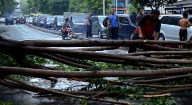 Pohon Besar Timpa Kantor Setda Kabupaten Sukabumi