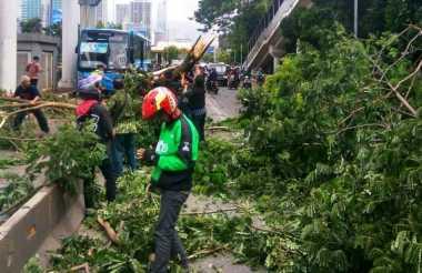 Angin Kencang Landa Jakarta, BPBD: Banyak Mobil Tertimpa Pohon Tumbang