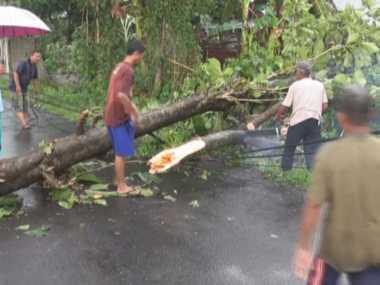 Awas, 4.000 Pohon di Bekasi Rawan Tumbang
