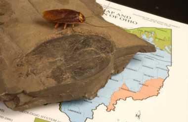 HOT THREAD (5): Ditemukan Fosil Kecoak Terbesar dari Masa Prasejarah