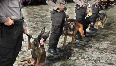Cegah Peredaran Narkoba, Anjing Pelacak Dikerahkan untuk Pengamanan Kereta