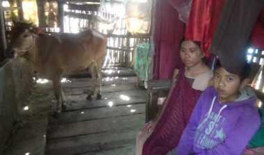 Hidup di Kandang Sapi, Kini Suami Ditahan Polisi