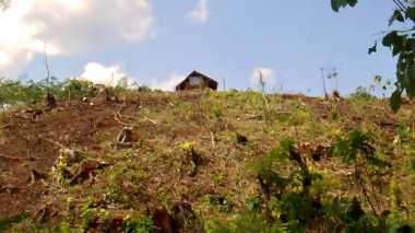 3.549 Hektare Hutan di Pangandaran dalam Kondisi Kritis