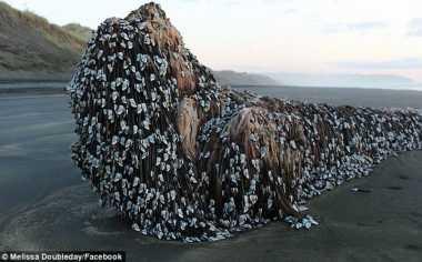 Makhluk Asing Raksasa Terdampar di Pantai Selandia Baru