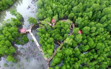 Cantiknya Ekowisata Tracking Mangrove di Gorontalo