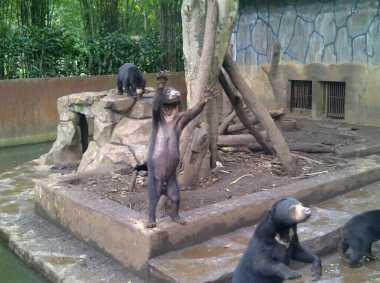 Pengelola Kebun Binatang Klaim Beruang Kurus Bukan Sakit atau Kelaparan