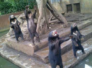 Beruang Madu 'Kelaparan', Kebun Binatang Bandung Bakal Diberi Sanksi Tegas