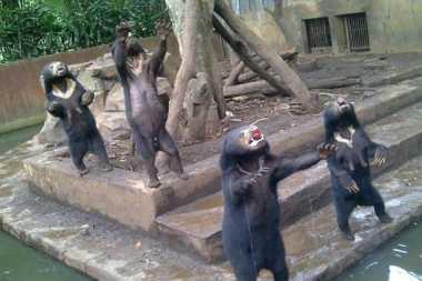 Tim BKSDA Ambil Foto Beruang Madu di Kebun Binatang Bandung