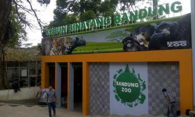 Empat Beruang Koleksi Kebun Binatang Bandung 'Disembunyikan'