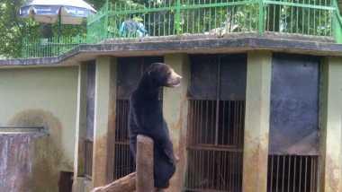 Pengelola Kebun Binatang: Tak Mungkin Beruang Makan Kotorannya Sendiri!