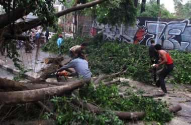 Awas! Puluhan Pohon di Jalan Protokol Solo Rawan Tumbang