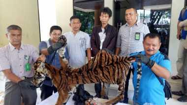 Lima Penjual Kulit Harimau Sumatera Ditangkap Petugas
