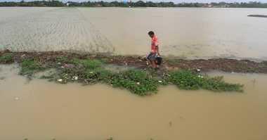 Ratusan Hektare Sawah di Lampung Timur Terendam Banjir
