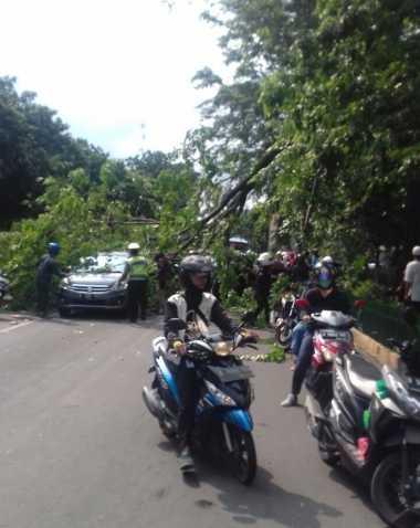 Apes! Mobil Ini Tertimpa Pohon Tumbang saat Melintas di Jalan TB Simatupang Jaksel