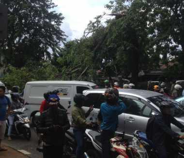 Ada Pohon Tumbang Timpa Mobil, Ruas Jalan TB Simatupang Macet Parah